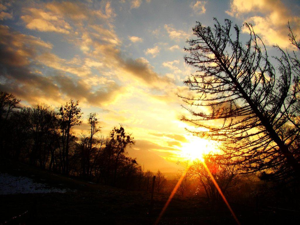 Baum im Sonnenuntergang am Salzburger Mönchsberg