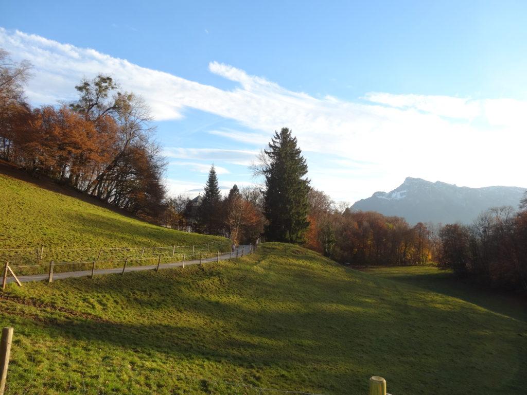 Salzburger Stadtbergwiese Wiese Weide am Mönchsberg